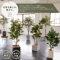 グリーン×プランターセット「w/g ファイカス×Cube」[高さ180cm・人工樹木・観葉植物]