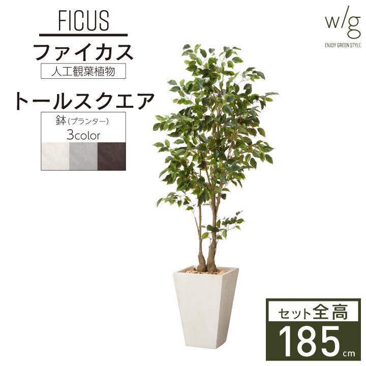 グリーン×プランターセット「w/g ファイカス×Tall Square」[高さ185cm・人工樹木・観葉植物]