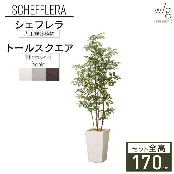 グリーン×プランターセット「w/g シェフレラ×Tall Square」[高さ170cm・人工樹木・観葉植物]