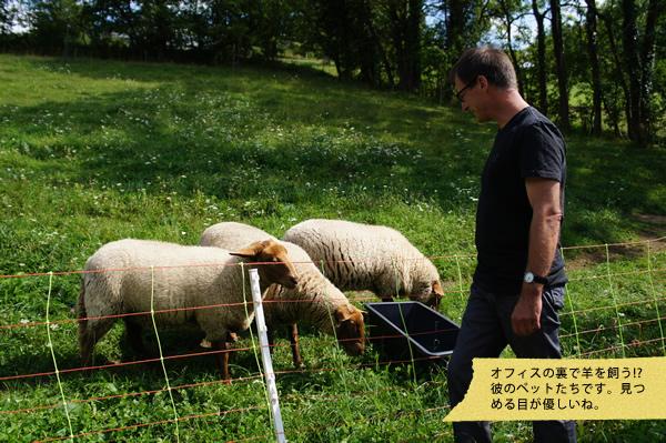 ペットの羊!?